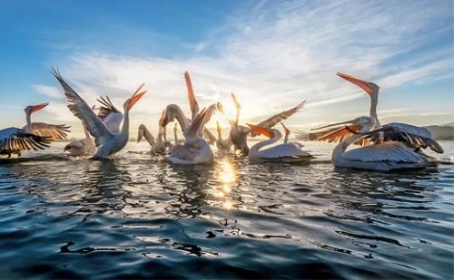 Екскурзия на 1-Ви Май Природния Резерват Езерото Керкини само за 19 лв.